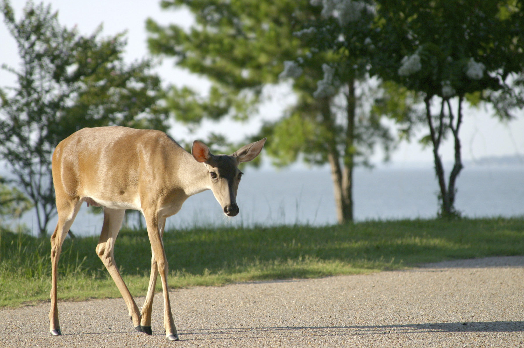 Oh Deer! Animal Strikes Spike Now Through End Of The Year